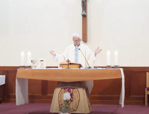 연중 제 13주일(교황 주일) (온라인 미사)